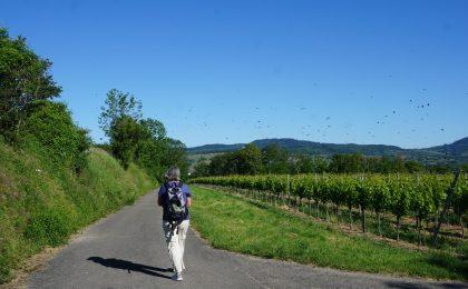 Kaiserstuhlpfad im Kaiserstuhl