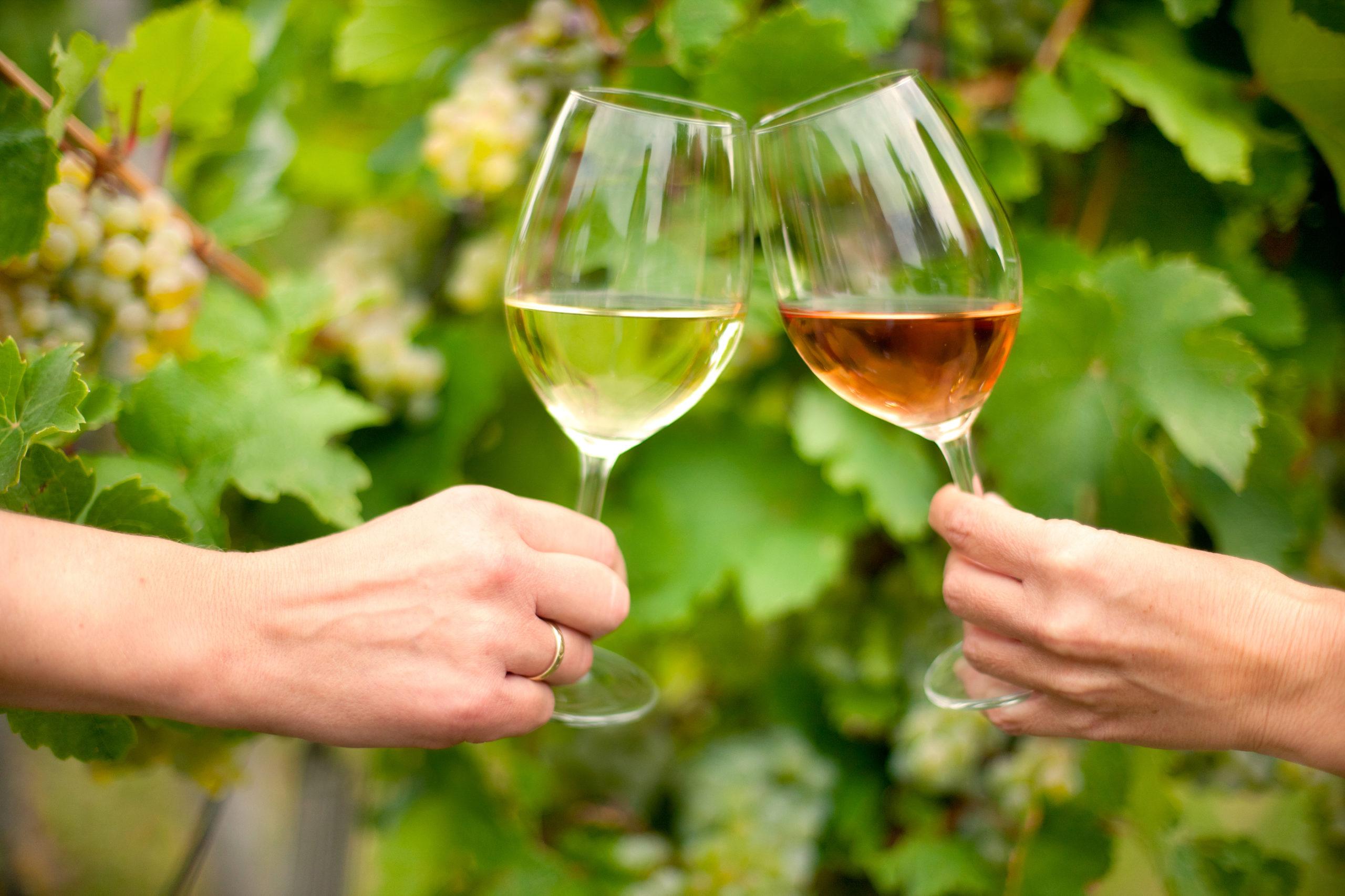 Weinprobe in der Ferienregion Marbach-Bottwartal