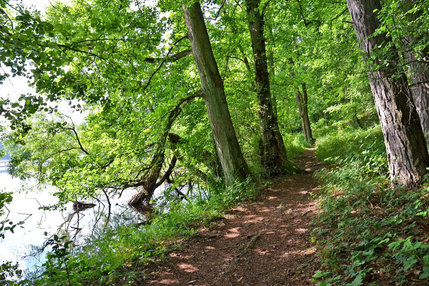 Wanderwege in der Feldberger Seenlandschaft