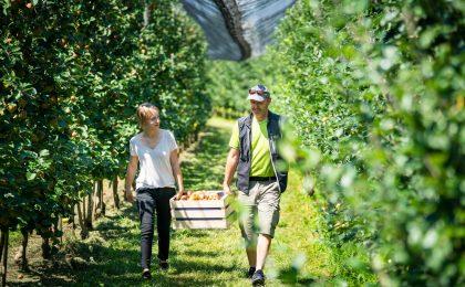 Herbstliche Genussmomente bei der Apfelernte am Bodensee