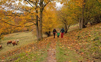 Wandern im Herbst im Weltwald