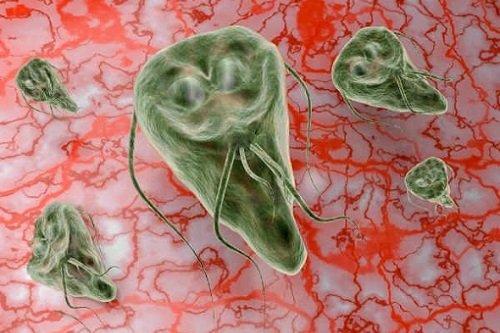 Baktériumok a vizeletben terhes nőkben 10 hét. A fertőzés fő tünetei a nőknél