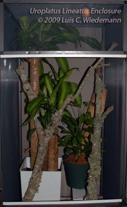 U. lineatus enclosure