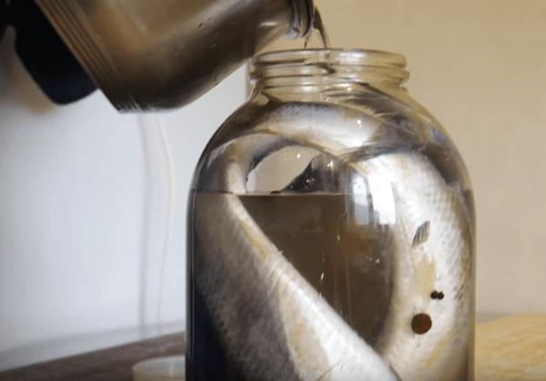 La saumure refroidie remplit le hareng