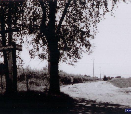 1972. Migdałowa róg Nowoursynowskiej