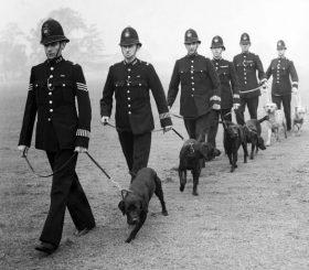 Полицейская собака в Великобритании. История