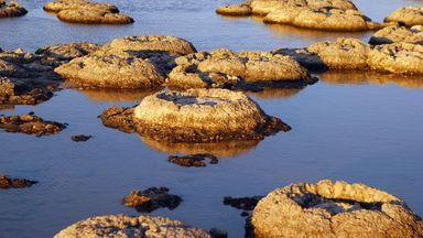 Строматолиты – самые старые формы жизни на земле