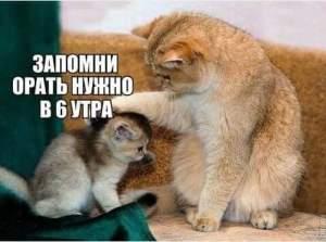 почему не надо заводить кошку