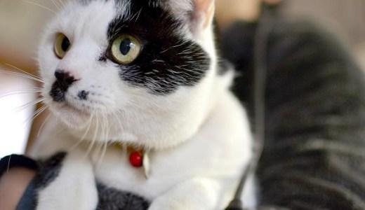 猫が吐く!原因や病気の可能性は?変なもの食べたのかしら?