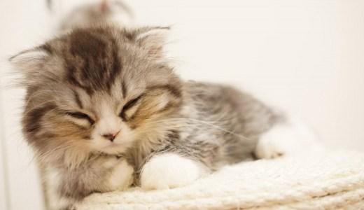 猫の寄生虫を写真や画像で見る・原因や症状も詳しく解説!