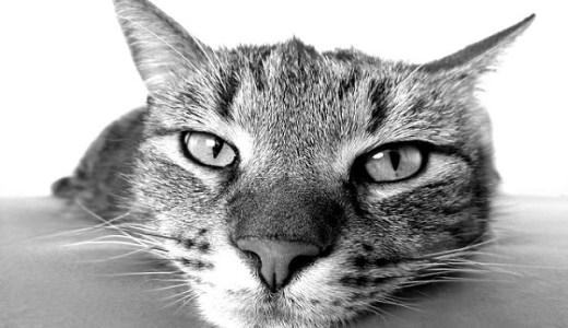 猫エイズ(猫免疫不全ウイルス感染症)の症状や治療と予防法!