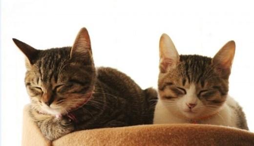 猫カフェ池袋!超絶癒しのおすすめ人気店を動画満載で紹介!