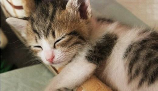 猫の睡眠は本能からの命令だった?寝てばかりの理由と秘密!