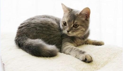子猫(成猫)を迎え入れるための準備や気をつけることは?