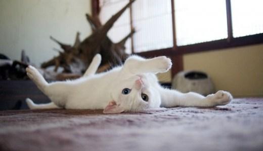 猫が痒がる!春から夏に多くなる皮膚の病気や対処法は?