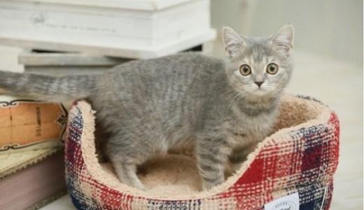 猫アレルギーでも猫は飼える?症状を軽減させる対策と対処法!