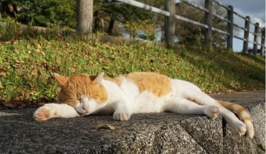 猫のノミ・ダニ対策!予防や駆除にもおすすめのお薬!