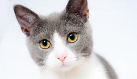 猫の噛みぐせの直し方や対処法は?怒っても嫌われるだけです!