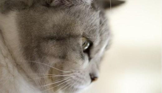 猫の唇や口の周りの病気!できものやポツポツなど原因や症状!