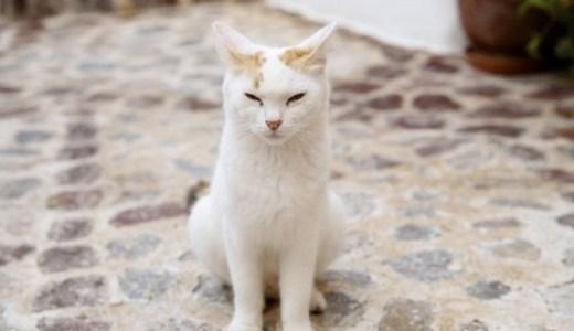 GWに猫の島へ旅行はいかが?日常を忘れて猫の楽園で癒される!