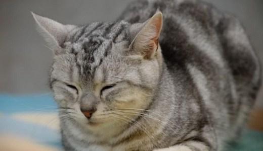 猫の抜け毛(ハゲ)やフケなど皮膚の異常!考えられる病気は?