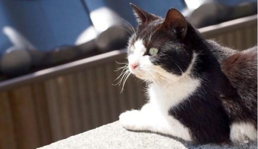 猫にかさぶたができるのは病気?怖い皮膚がんの可能性も!