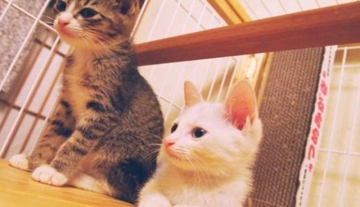 猫の病気で空気感染するのは?その予防法や気をつけること!