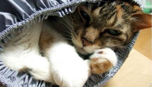猫の気管支炎~咳が止まらない~原因や治療と予防法まで!