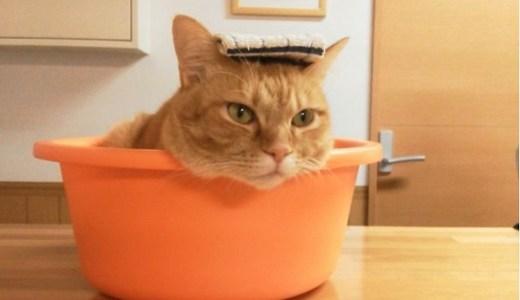 GWの旅行は看板猫のいる温泉旅館で癒される!おすすめ宿7選!