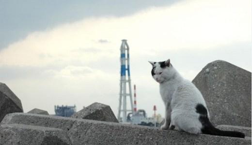 大分の猫の島!佐伯市深島へのアクセスや詳細と猫たち!