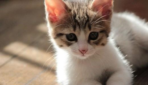 てしま旅館(山口県)猫庭のアクセスや宿泊など!温泉で猫助け!