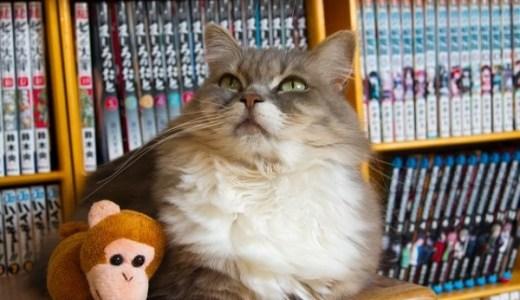 猫カフェでモテるための極意とは?これさえ学べば人気者に!