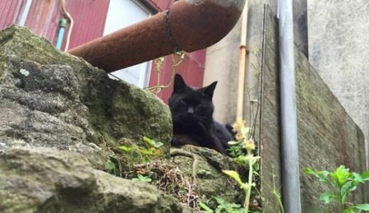 江ノ島から猫が消えた!遠隔操作事件後に起こった異変とは?