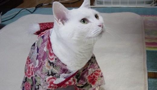 猫のレンタルペットはかわいそう?猫が抱えるストレスと問題点!