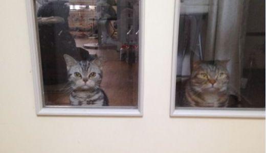 猫がお迎え♪玄関あけたら2秒で2にゃん!/わが家の女王猫
