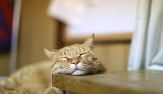 猫になりたい!猫の生き方に憧れを抱く人々が急増中!