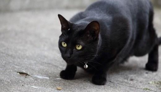 猫のお腹の皮膚のたるみはなぜ?その役割や肥満との見分け方!
