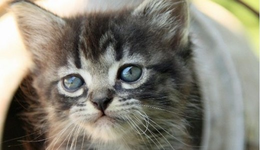 広島県で殺処分ゼロがスタート!処分対象の猫すべて引き取り!