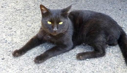 英政府がラリー・パーマストンに続き3匹目の新たな猫を採用!