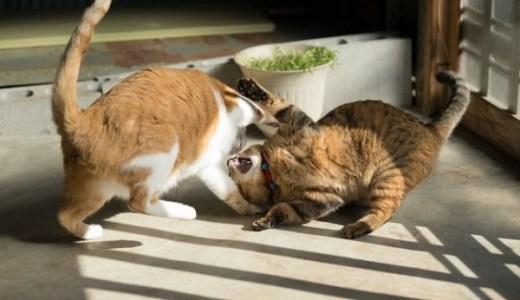 英首相官邸に残留の猫ラリーと外務大臣の猫のバトルが勃発!