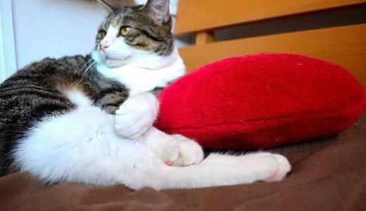 猫の皮膚に白い粉やかさぶたが!その原因や病気の可能性は?