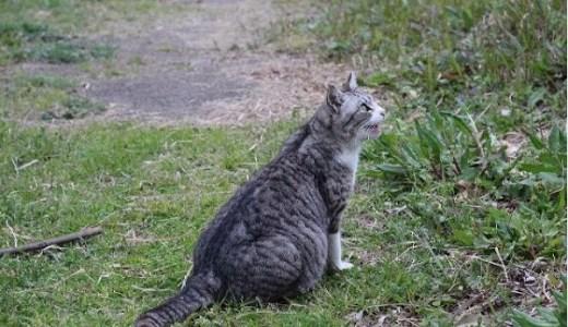 猫が皮膚を切った?切り傷がある場合の対処法や注意すること!