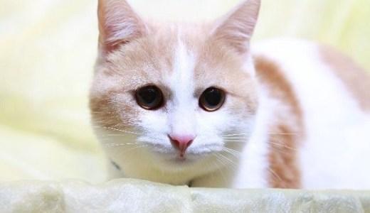 猫の目に水泡・水ぶくれ状のもの?考えられる原因や病気!