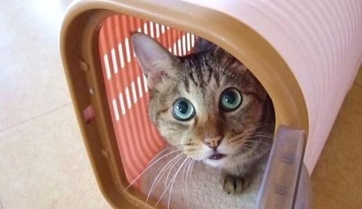 猫の健康診断の項目や料金,頻度と必要性は?血液や尿検査など!