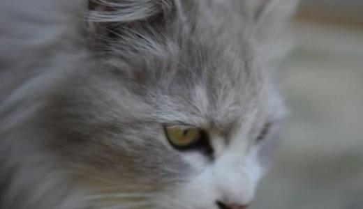 猫の呼吸が浅い、早いときに考えられる原因や病気とは?