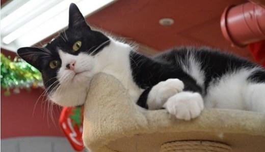 猫の呼吸が早い、荒い、苦しい時などの原因や病気と対処法など!