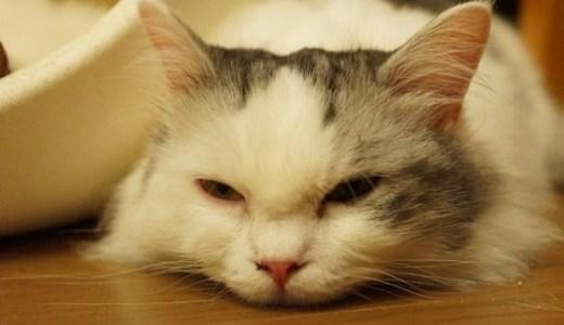 ペットの夜間救急時に!奈良県内の動物病院のご案内!