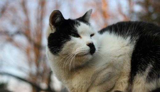 岐阜県でペットの夜間救急にも対応の動物病院一覧!