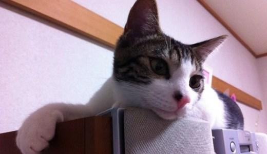 名古屋、愛知の夜間診療、救急対応の動物病院の一覧!