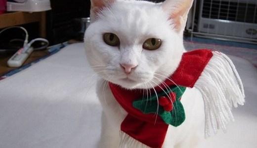 猫ブームで心臓病患者が減少?猫好きは長生きするって本当?